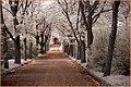 2015 05 09 Georgen Parochial II Friedhof Berlin Friedrichshain - 01 b (17463091832).jpg