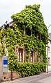 2015 05 14 001 Wohnhaus mit Efeu bewachsen.jpg