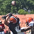 2015 Cleveland Browns Training Camp (20238725992).jpg