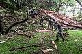 2015 Texas flooding 150525-Z-ZZ999-004.jpg