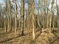 2016-03-01 15 55 06 Forest within Fred Crabtree Park in Reston, Fairfax County, Virginia.jpg