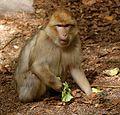 2016-04-21 13-51-52 montagne-des-singes.jpg