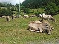 24020 Valgoglio, Province of Bergamo, Italy - panoramio.jpg
