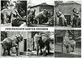 30702-Dresden-1987-Zoologischer Garten, Elefanten 6-teilig-Brück & Sohn Kunstverlag.jpg
