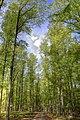 664 71 Lažánky, Czech Republic - panoramio (1).jpg