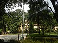 71Mehan Garden Ermita Manila Universidad de Manila 41.jpg