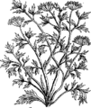 A compleat body of husbandry Fleuron T030997-58.png