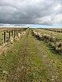 A farm track by Lang Grain Head - geograph.org.uk - 736286.jpg
