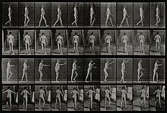 A man walking. Photogravure after Eadweard Muybridge, 1887. Wellcome V0048749.jpg