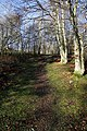 A path at Broadmeadows Youth Hostel - geograph.org.uk - 1137847.jpg
