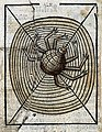 A spider on its web, woodcut, 1547 Wellcome L0029216.jpg