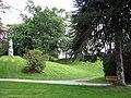 Aalesund - Araucaria araucana.jpg