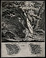 Above, a badger in a forest, below, its tracks. Etching by J Wellcome V0021112.jpg