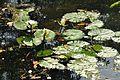 Acharya Jagadish Chandra Bose Indian Botanic Garden - Howrah 2011-01-08 9862.JPG