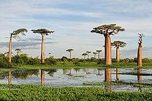 ประเทศมาดากัสการ์