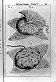 Adrianus Spigelius, De formato foetu Wellcome L0026175.jpg