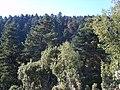 Aenos forest.jpg