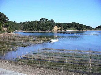 Kathleen Mary Drew-Baker - Nori cultivation Mie Prefecture, Japan