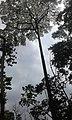 Agodi Garden Ibadan6.jpg