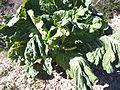 Agricultura a Puebla de Arenoso - 5.jpeg