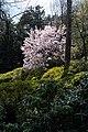 Albero in fiore.jpg