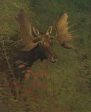 Albert Bierstadt - Study of a moose.jpg