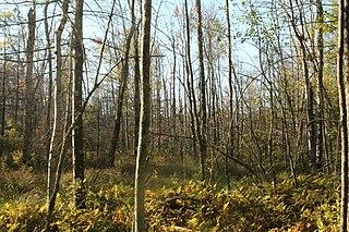 Bear Swamp Preserve