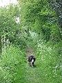 Along the Ridgeway path at Wigginton - geograph.org.uk - 1284117.jpg