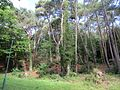Alum Chine, Bournemouth - panoramio (1).jpg