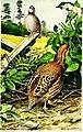 American game-bird shooting (1910) (14568691539).jpg