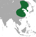Amur Hedgehog area without borders.png