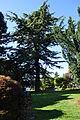 Anacortes - Causland Park 12.jpg