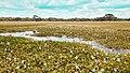Anawilundawa Wetland Sanctuary in Anawilundawa.jpg