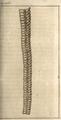 Andry - De la génération des vers (1741), planche p. 266.png