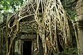 Angkor Wat Ta Prohm Temple doorway overgrown with tree roots.jpg