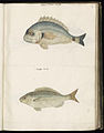Animal drawings collected by Felix Platter, p1 - (160).jpg