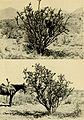 Animal life of the Carlsbad cavern (1928) (18198725181).jpg