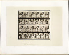 Animal locomotion. Plate 575 (Boston Public Library).jpg