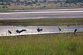 Animals at Pilanesberg National Park 3.jpg