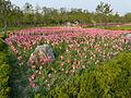 Ansan Lake Park Spring 2015 19.JPG