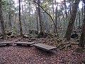 Aokigahara Forest (10863468883).jpg
