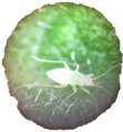 Aphid on a Leaf (Aphidoidea).png