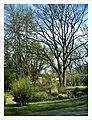 April Botanischer Garten Freiburg - Master Botany Photography 2013 - panoramio (8).jpg