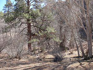 Aragon, New Mexico - Image: Aragon River
