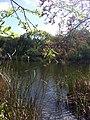 Arastradero Lake - panoramio.jpg