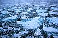 Arctic Ice.JPG