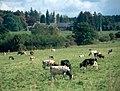 Ardennenlandschaft-08-2002-gje.jpg