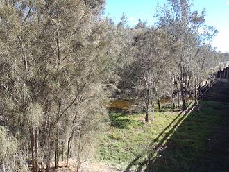Arthur River (Western Australia) - Arthur River from bridge over Albany Highway
