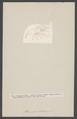 Athanas nitescens - - Print - Iconographia Zoologica - Special Collections University of Amsterdam - UBAINV0274 006 02 0044.tif