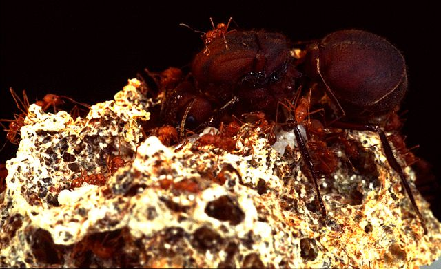 symbiotic relationship between fungi and insects